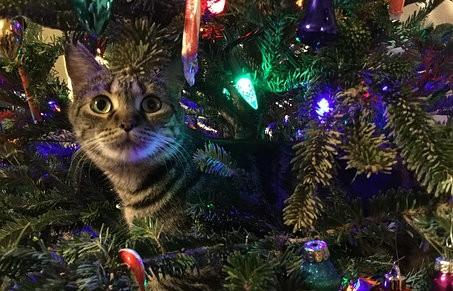 kitty-1708657__340